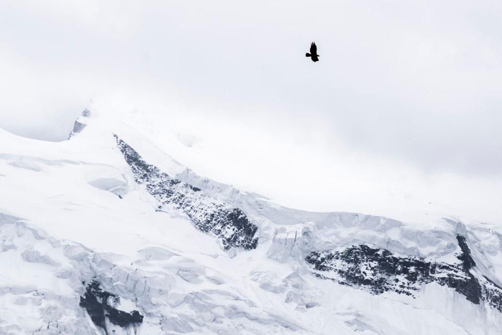 Photographie d'art Michel d'Oultremont Belgique animaux aigle montagne