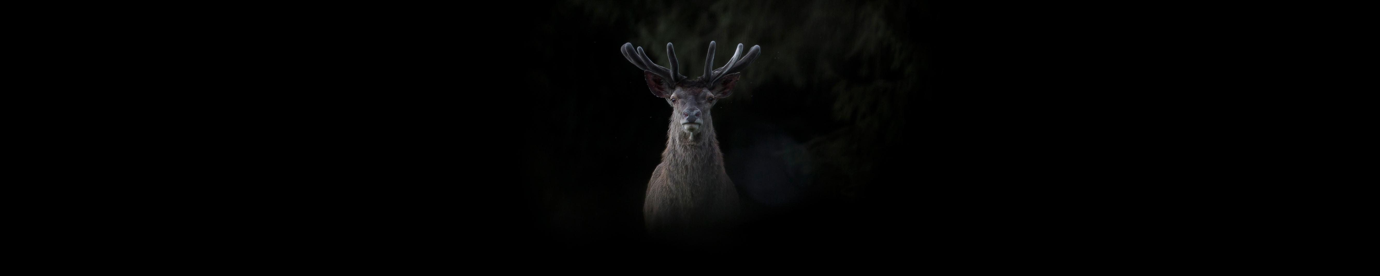 Photographie d'art Michel d'Oultremont Belgique animaux cerf cover