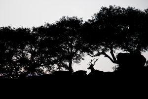 Photographie d'art Michel d'Oultremont Belgique animaux cerf espagne