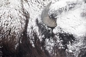 corne yellowstone bison pelage hiver neige