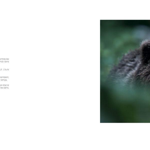 Photographie d'art Michel d'Oultremont Belgique animaux cover livre