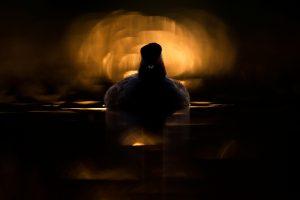 grèbe à cou noir soleil noir oiseau nature photo pays-bas