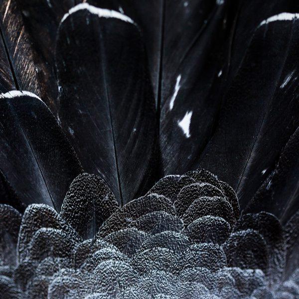 toundra norvège tetra lyre neige nature hiver