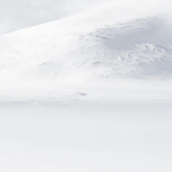 Photographie d'art Michel d'Oultremont Belgique animaux boeuf musqué Norvège