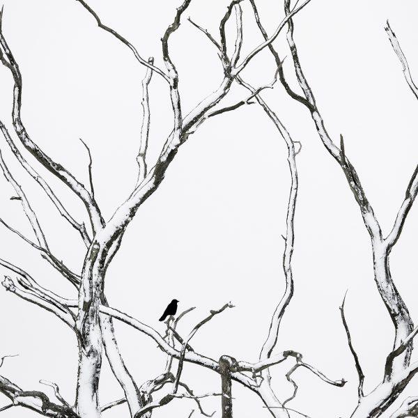 Photographie d'art Michel d'Oultremont Belgique animaux corneille noire